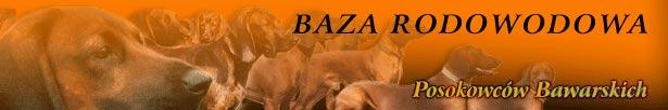 Baza BGS